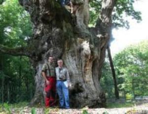 treesafety